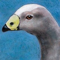Bird-Head-sereis-Cape-Barren-Goose-by-Linden-Lancaster