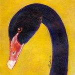 Bird-Head-Series-Black-Swan-by-Linden-Lancaster