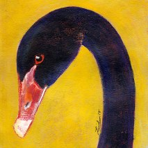 Bird-Head-Series-Black-Swan-by-Linden-Lancaster