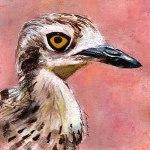 Bird-head-series-Bush-Stone-Curlew-by-Linden-Lancaster