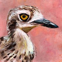 Bird-head-series-Bush-Stone-Curlew-by-Linden-Lancaster